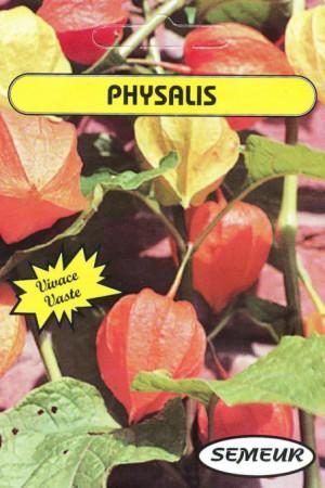 Semences de fleurs : Physalis Lanterne chinoise