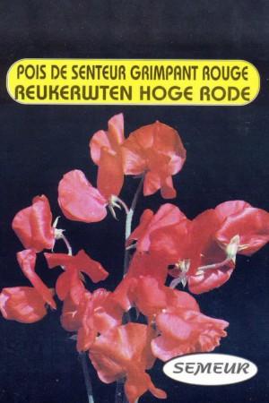 Semences de fleurs : Pois de senteur Royal Family rouge 1