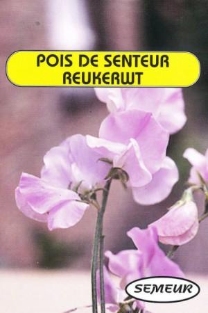 Semences de fleurs : Pois de senteur Royal Family rose