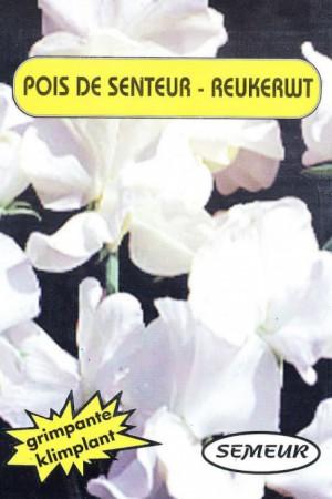 Semences de fleurs : Pois de senteur Royal Family blanc