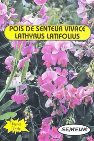 Semences de fleurs : Pois de senteur Vivace