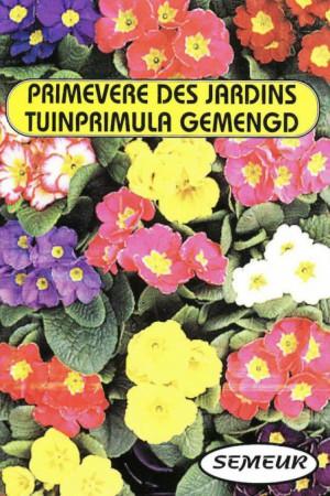 Semences de fleurs : Primevère Des jardins
