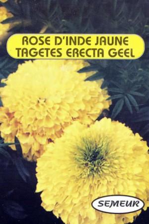 Semences de fleurs : Rose d'Inde Yellow Suprême