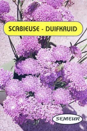 Semences de fleurs : Scabieuse Bleue