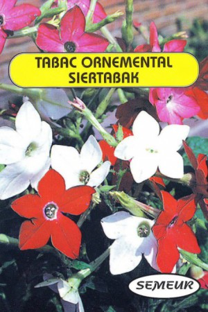 Semences de fleurs : Tabac Ornemental