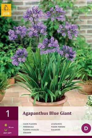 Bulbes à fleurs plantation printemps : Agapanthe Bleue