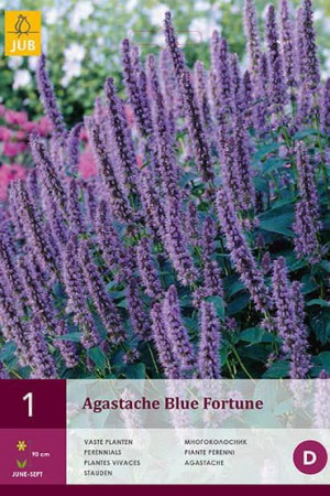 Bulbes à fleurs plantation printemps : Agastache Blue fortune