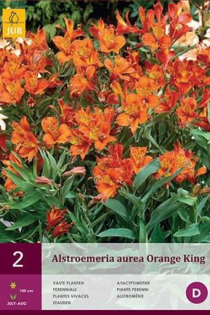 Bulbes à fleurs plantation printemps : Alstroemeria Orange