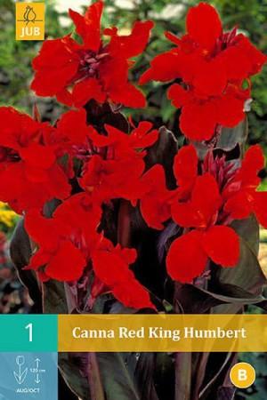 Bulbes à fleurs plantation printemps : Cannas Rouge feuille pourpre