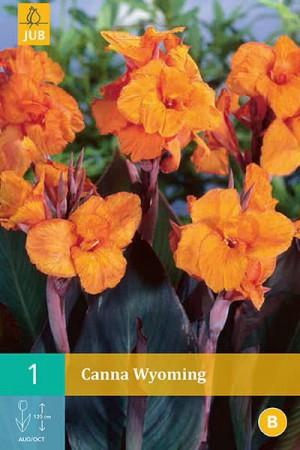 Bulbes à fleurs plantation printemps : Cannas Orange feuille pourpre