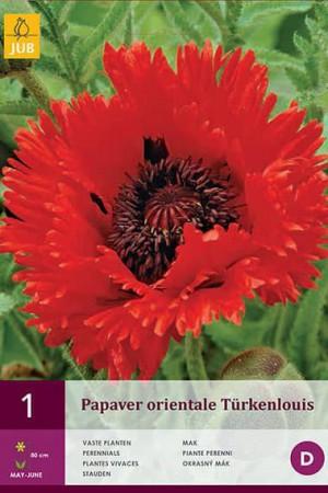 Bulbes à fleurs plantation printemps : Coquelicot oriental Rouge