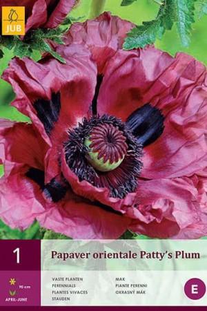 Bulbes à fleurs plantation printemps : Coquelicot oriental Pourpre