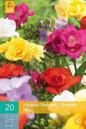 Bulbes à fleurs plantation printemps : Freesia Double varié