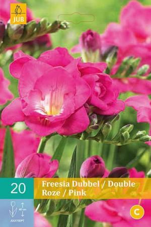 Bulbes à fleurs plantation printemps : Freesia Double rose
