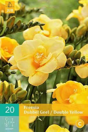 Bulbes à fleurs plantation printemps : Freesia Double jaune