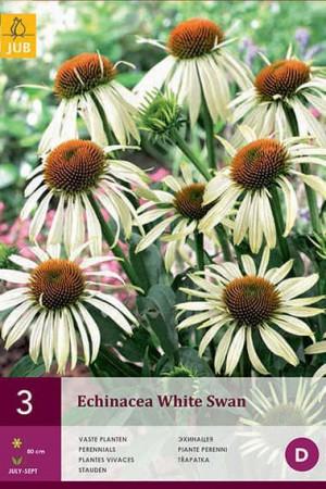Bulbes à fleurs plantation printemps : Echinacea Blanc