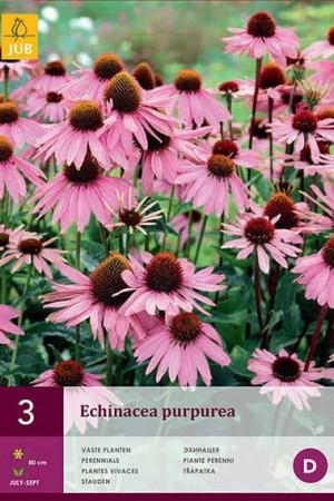 Bulbes à fleurs plantation printemps : Echinacea Pourpre