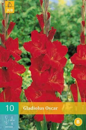 Bulbes à fleurs plantation printemps : Glaïeul Rouge écarlate