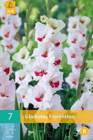 Bulbes à fleurs plantation printemps : Glaïeul Blanc à cœur rouge