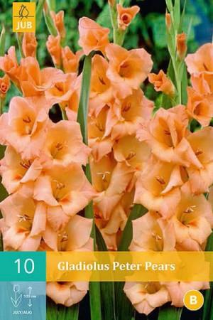 Bulbes à fleurs plantation printemps : Glaïeul Orange