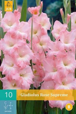 Bulbes à fleurs plantation printemps : Glaïeul Rose pâle