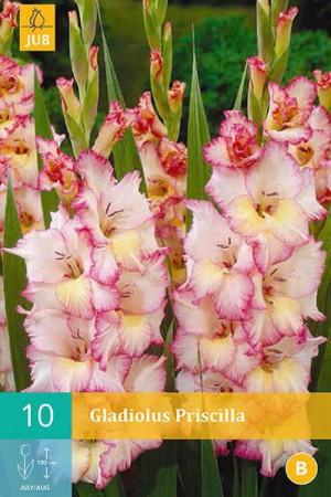 Bulbes à fleurs plantation printemps : Glaïeul Blanc à cœur jaune