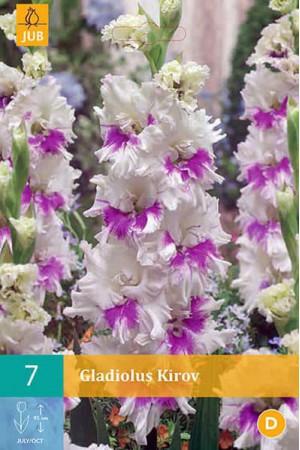 Bulbes à fleurs plantation printemps : Glaïeul Blanc et mauve frisé