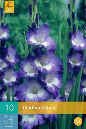 Bulbes à fleurs plantation printemps : Glaïeul panaché Bleu cœur blanc