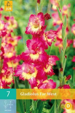 Bulbes à fleurs plantation printemps : Glaïeul panaché Rose à cœur jaune