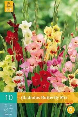 Bulbes à fleurs plantation printemps : Glaïeul papillon En mélange