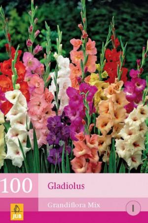 Bulbes à fleurs plantation printemps : Glaïeul En mélange