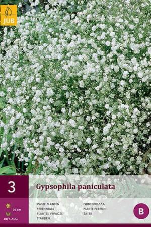 Bulbes à fleurs plantation printemps : Gypsophile Blanc