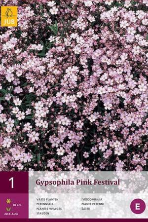Bulbes à fleurs plantation printemps : Gypsophile Rosea