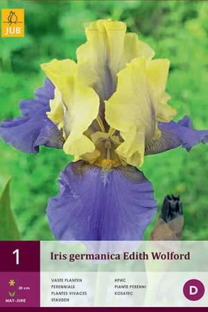 Bulbes à fleurs plantation printemps : Iris germanica Jaune et bleu