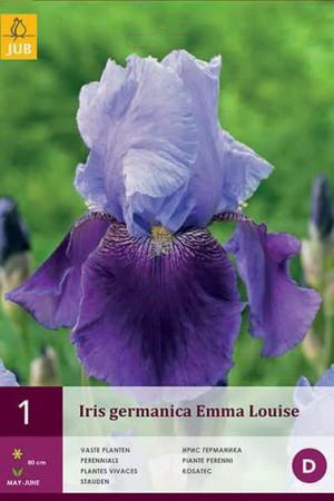 Bulbes à fleurs plantation printemps : Iris germanica Bleu ciel et bleu foncé