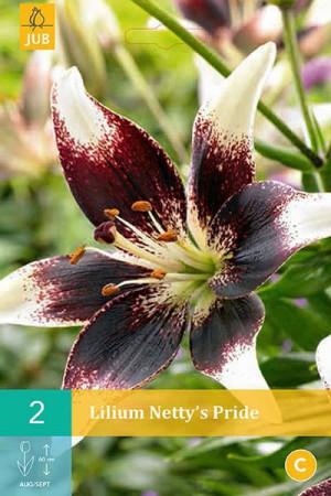 Bulbes à fleurs plantation printemps : Lis asiatique Blanc à cœur noir
