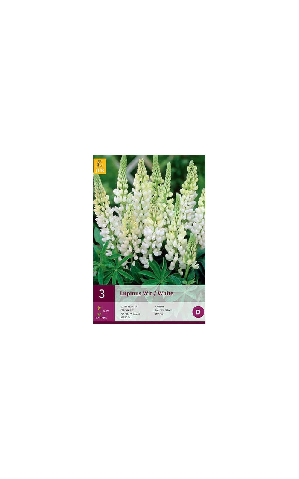 Bulbes à fleurs plantation printemps : Lupin Blanc : Hello ...