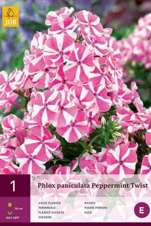 Bulbes à fleurs plantation printemps : Phlox Etoilé blanc et rose