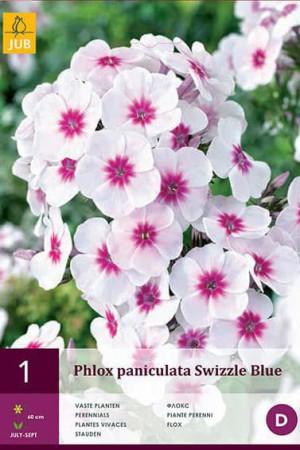 Bulbes à fleurs plantation printemps : Phlox Blanc à cœur pourpre