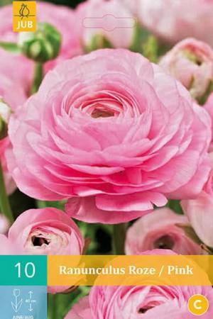 Bulbes à fleurs plantation printemps : Renoncule Rose