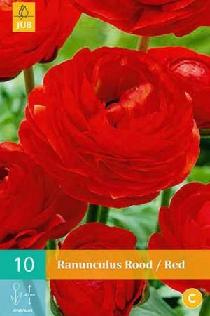 Bulbes à fleurs plantation printemps : Renoncule Rouge
