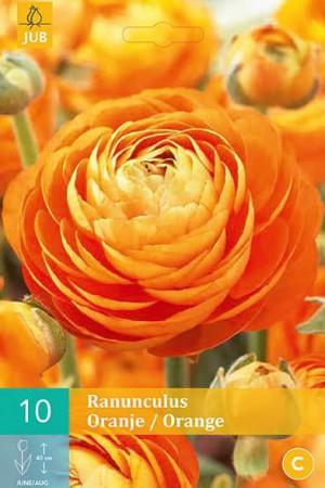 Bulbes à fleurs plantation printemps : Renoncule Orange
