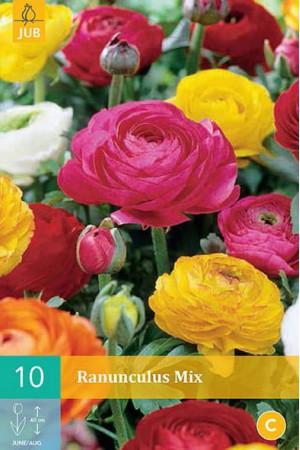 Bulbes à fleurs plantation printemps : Renoncule En mélange