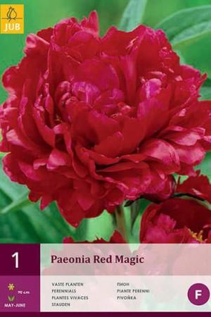 Bulbes à fleurs plantation printemps : Rose pivoine Rouge