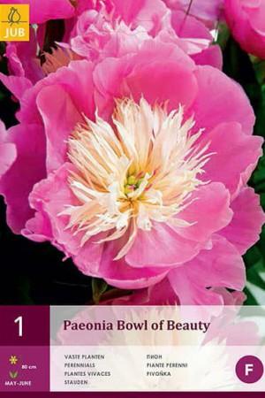 Bulbes à fleurs plantation printemps : Rose pivoine Rose à cœur blanc