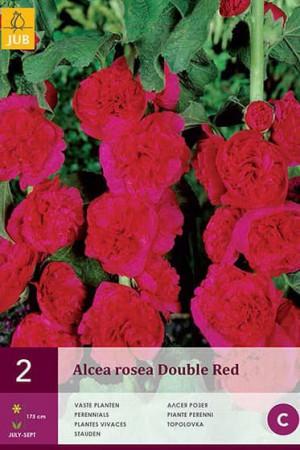 Bulbes à fleurs plantation printemps : Rose trémière Rouge