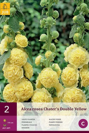 Bulbes à fleurs plantation printemps : Rose trémière Jaune