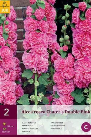 Bulbes à fleurs plantation printemps : Rose trémière Rose