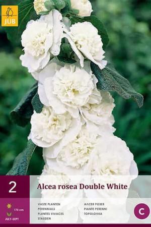 Bulbes à fleurs plantation printemps : Rose trémière Blanche