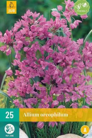 Bulbes à fleurs plantation automne : Allium  : Allium Oreophilum